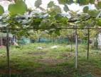 Vanzare Casa la sol Constanta Coiciu pret 160000  EUR