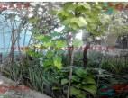 Vanzare Casa la sol Constanta Palazu Mare pret 125000  EUR